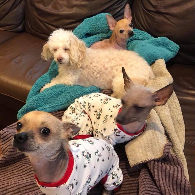Rescue dogs of Chickenlandia