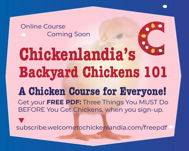 Welcome to Chickelandia